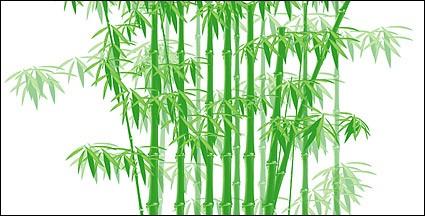 竹の画像 p1_32